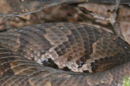 Copperhead camoflage