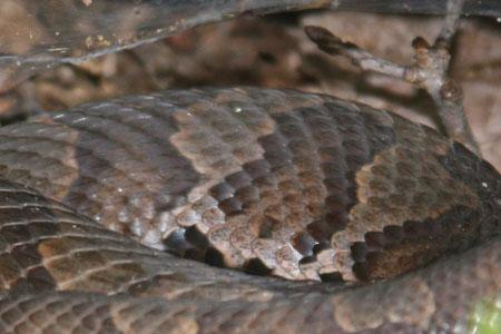 Copperhead camoflage